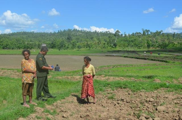 Tampak lahan sawah warga Belu kering kerontang, akibat ketiadaan air.