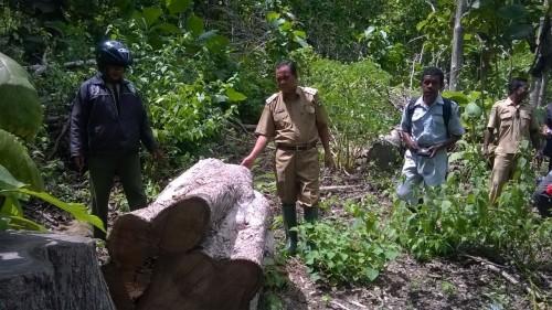 Wabup Malaka, Daniel Asa memantau sisa-sisa illegal logging di Io Kufeu, Malaka.