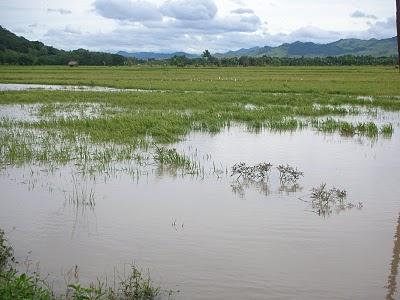 Ilustrasi Sawah Terandam Banjir.