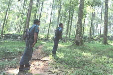 Polisi Hutan