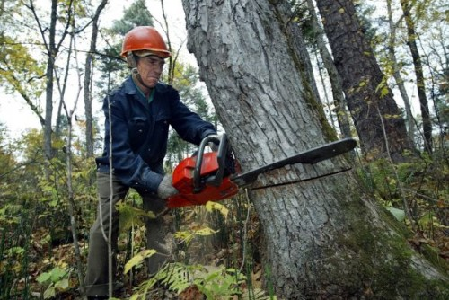Ilustrasi Illegal Logging