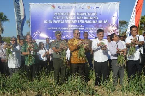 Menteri Desa panen bawang tuk tuk di Belu