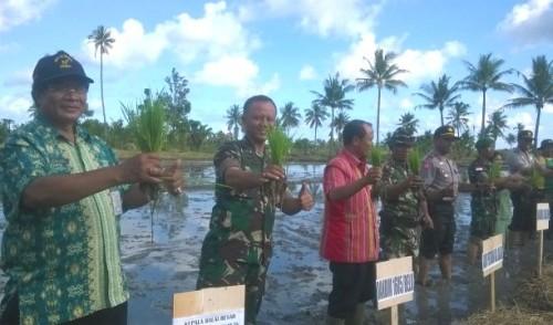 Upsus, TNI tanam padi lima hektare.
