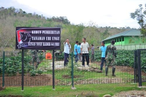 Kebun Ubi Ungu milik Satgas Pamtas RI-RDTL