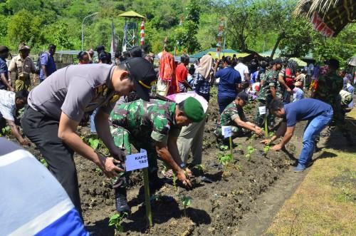 Jajaran Satgas Pamtas dan masyarakat tanam ubi ungu di Dafala