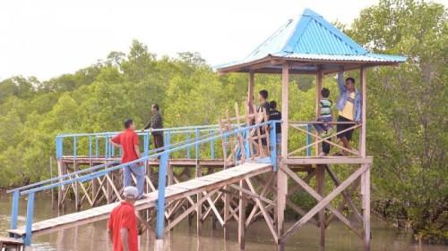 Wisata Mangrove di Oesapa.
