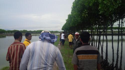 Peserta stuba sedang melihat tambak pengembangan ikan bandeng.
