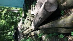 Inilah kayu gelondongan yang mulai lapuk.