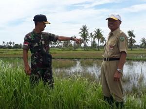 Danramil Betun dan Kadis Ketahanan Pangan Pantau program UPSUS di Malaka.