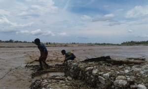 Tampak dua anak sedang mengumpulkan kayu ditepi banjir Benenain.