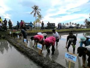 Dandim Belu pimpin penanaman padi di Malaka Tengah.