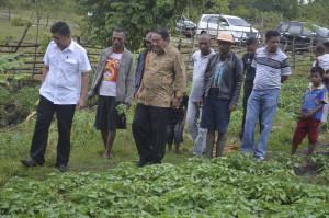 Anggota DPD RI dan Bupati Belu pantau pengembangan ubi ungu di Belu.